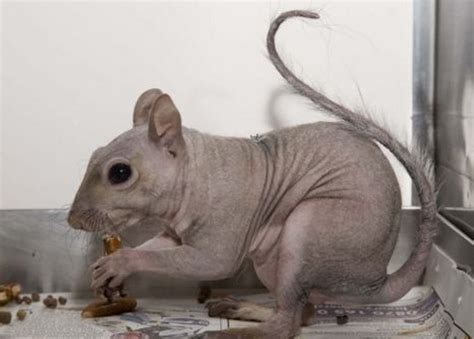 These 13 Animals Without Fur Look Totally Different